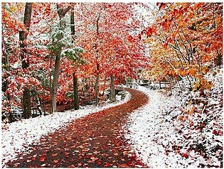Red Trees Winter Forest DIY Diamond Painting 5D Square Drills Cross Stitch Kits