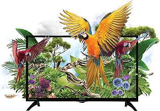 Orient - Macaw 32 - HD LED TV - Black
