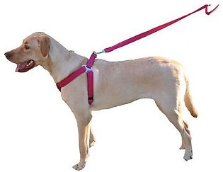 Dog & Puppy Body Foam Harness With Leash, Size Choice Available (S, M, L, XL)