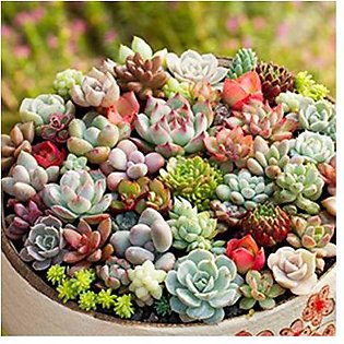 Mix Succulent Seeds