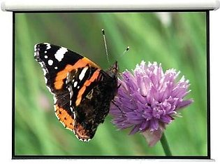 Wall Mounted 13.4x10 Lucky Fine Fabric Projector screen