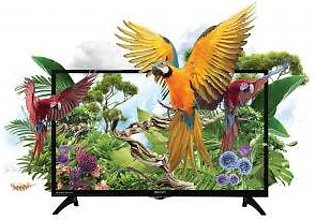 Orient 40HD Macaw