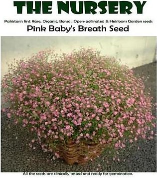 The Nursery Pink Baby's Breath Seeds-PIS7y